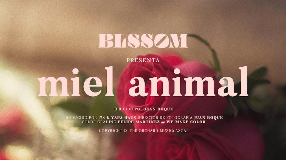 MUSIC VIDEO, Miel Animal, BLSSOM