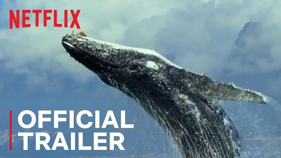 Our Planet - Netflix