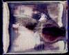 Last polaroids...