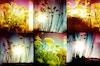 Les fleurs précipitées (flowers).