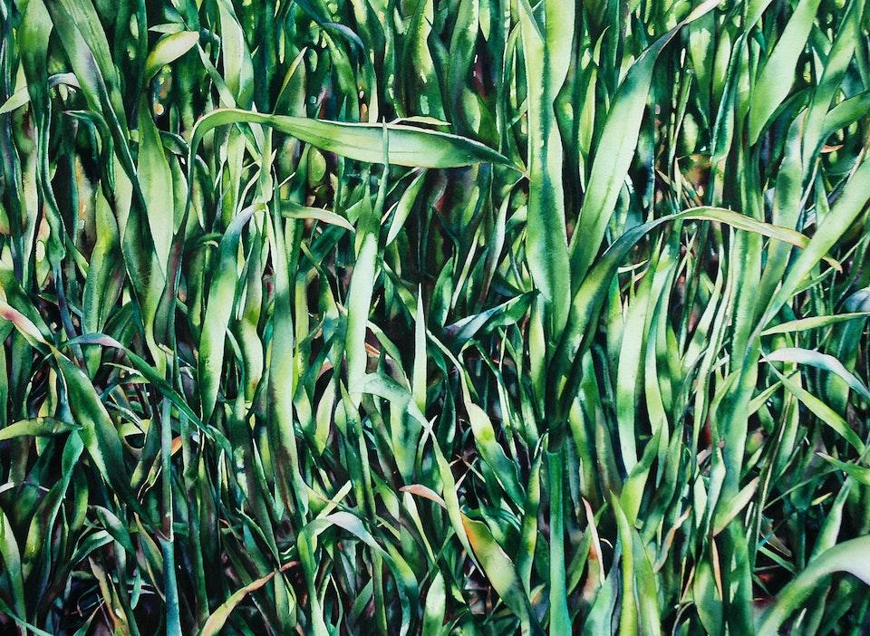 grass watercolourWEB1800