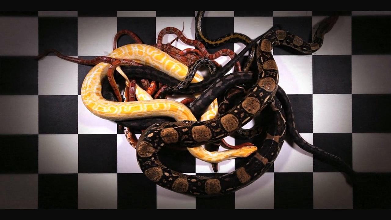 Animal Circus - Snakes & Ladders