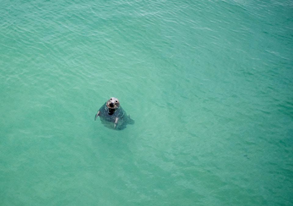 Lifestyle - Seal - St Ives
