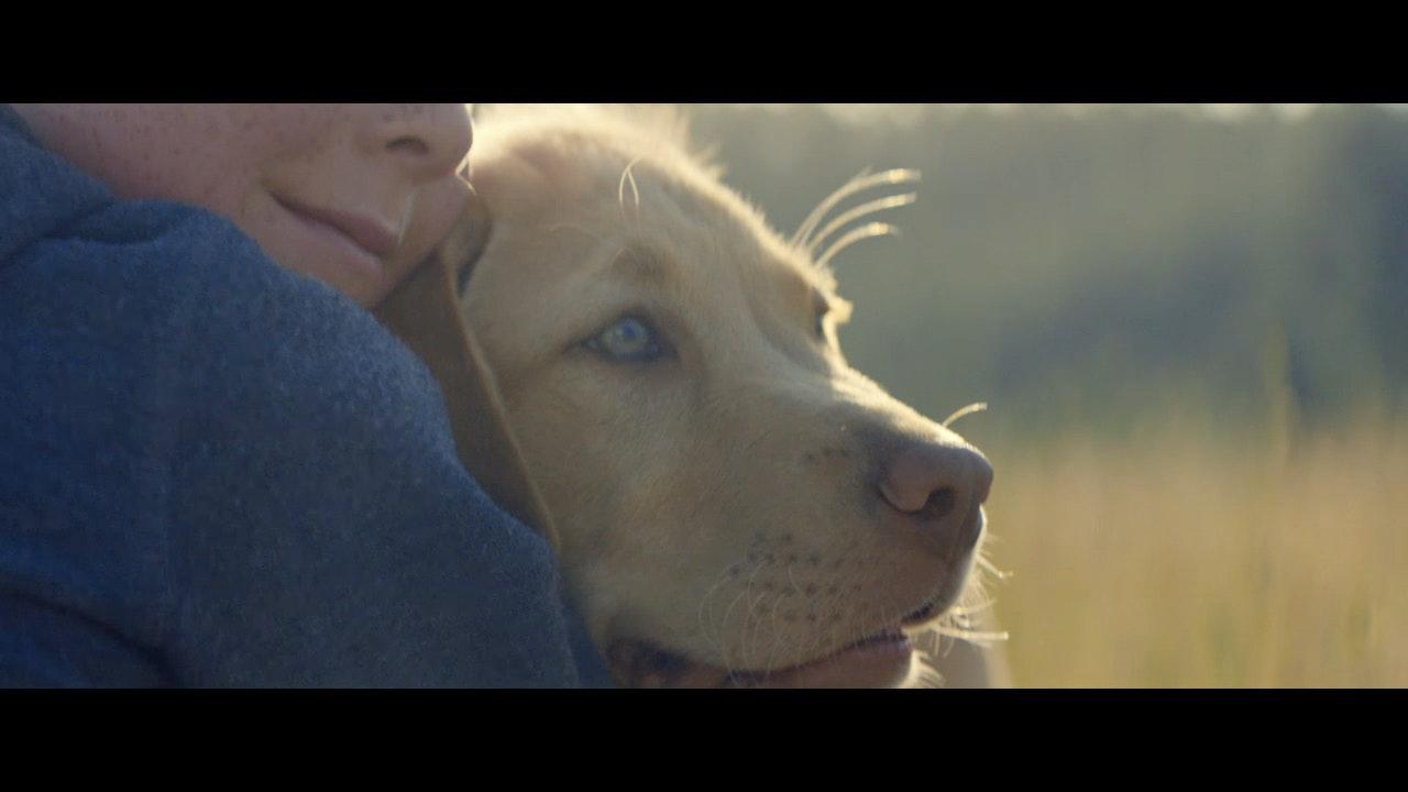 FOLKSAM 'Kids & Dogs' -