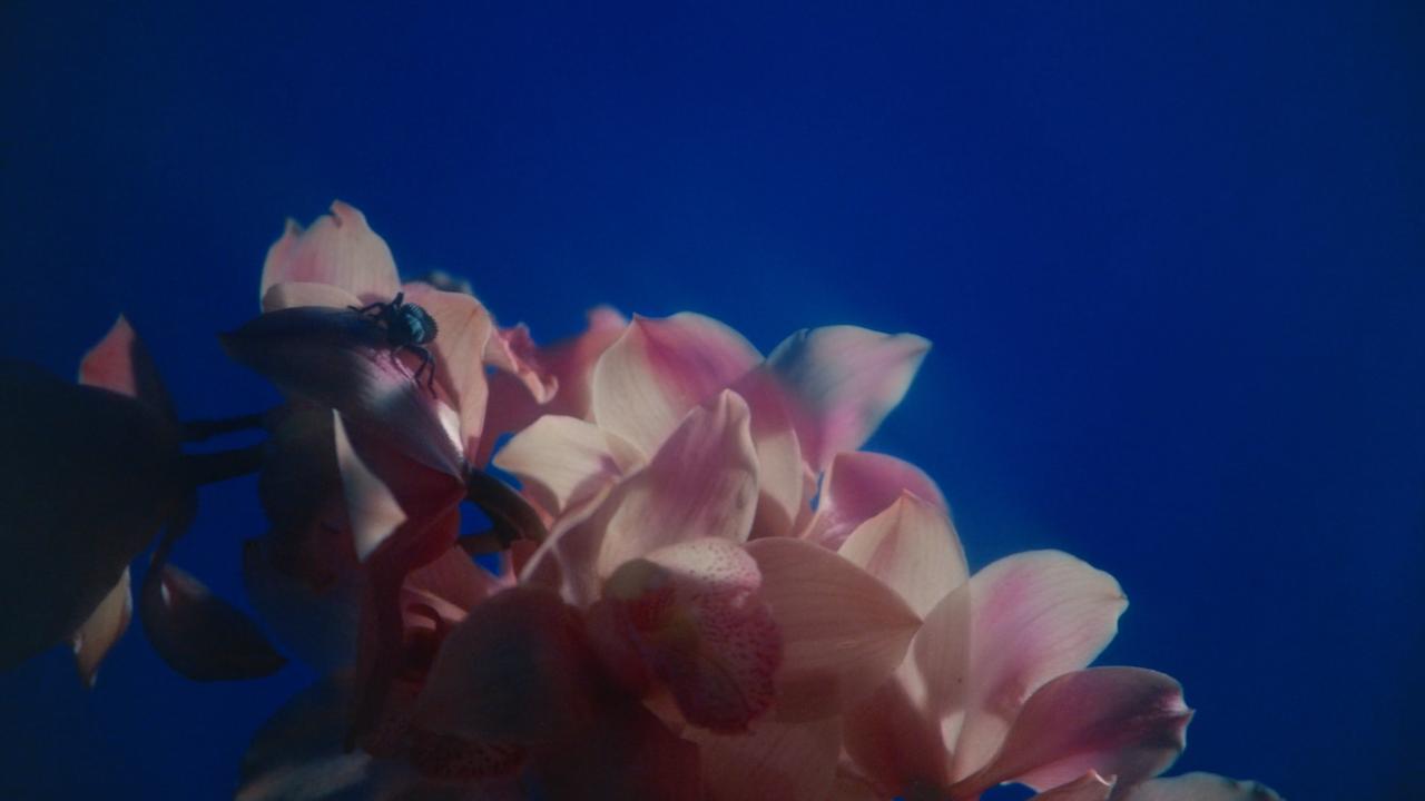 Screen Shot 2021-03-23 at 12.46.00 PM