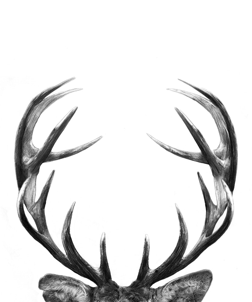 Stag-2