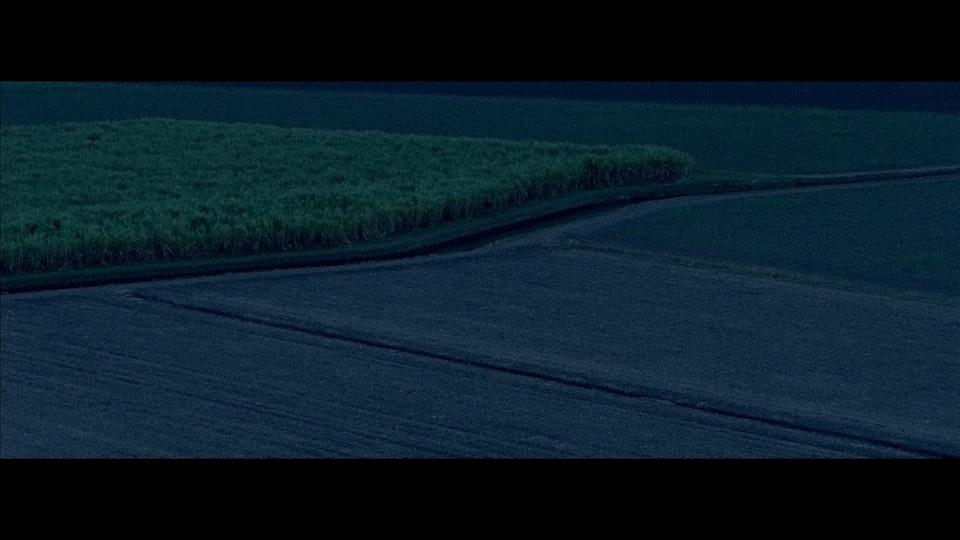 In a Cane Field