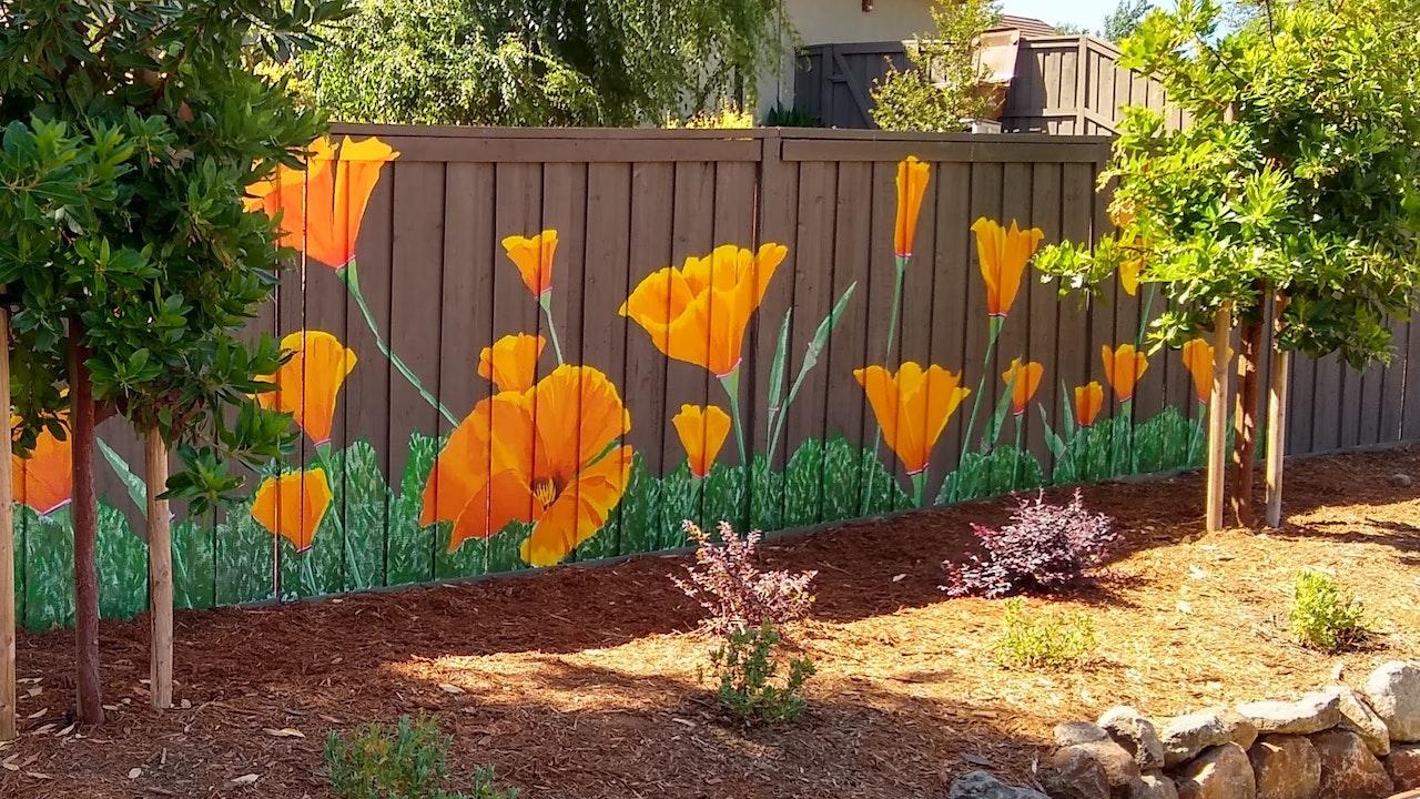 Rocklin garden wall poppies