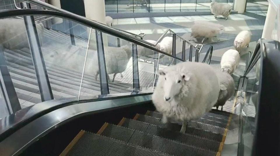 The Trainline - Sheep