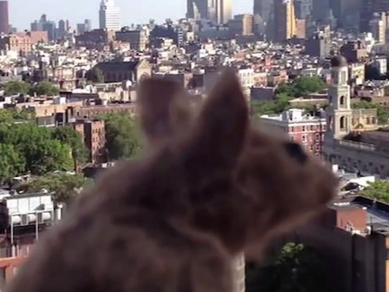 Mouse in New York