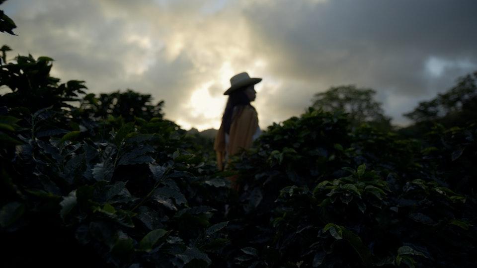 NESPRESSO - NESPRESSO — MO — NICARAGUA DIR CUT.00_00_22_06.Still037