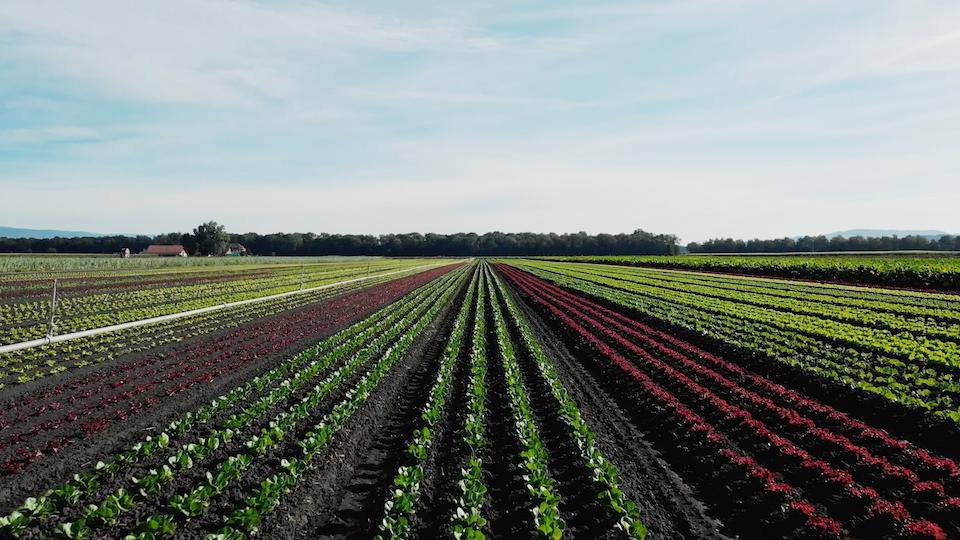 """Initiativfilm """"Für eine Schweiz ohne synthetische Pestizide"""""""
