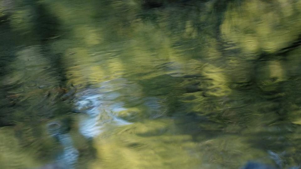 devon wildlife trust - the river