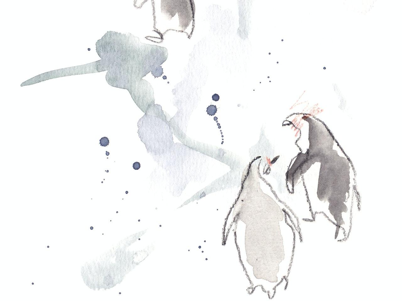 Humboldt's Penguin2