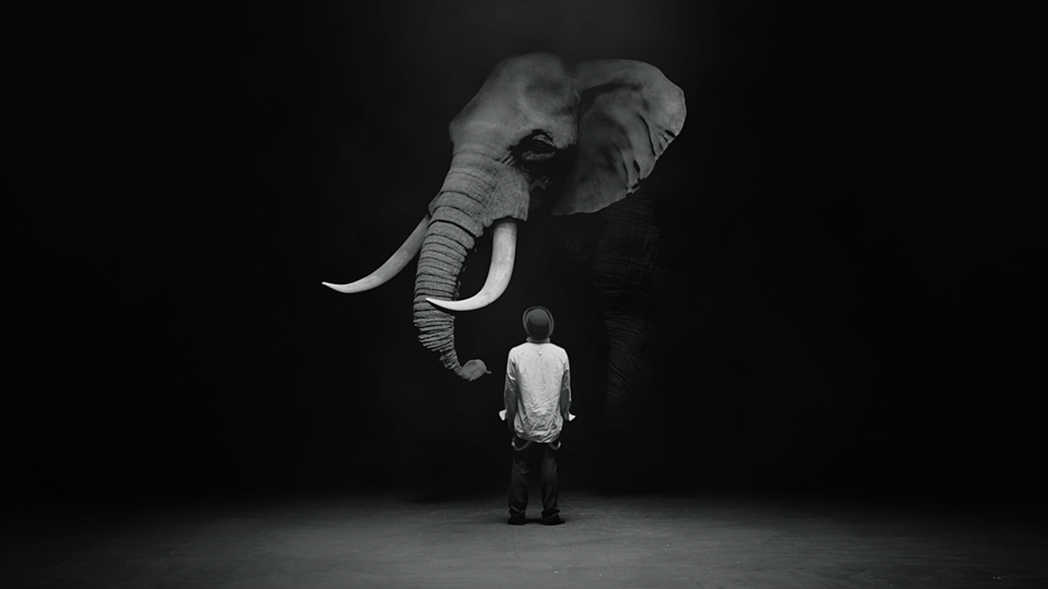 www.nicholasbennettdop.com - THE DOG & THE ELEPHANT