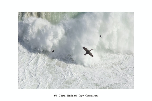 #7-Gösta-Reiland-Cape-Point-Cormorants copy