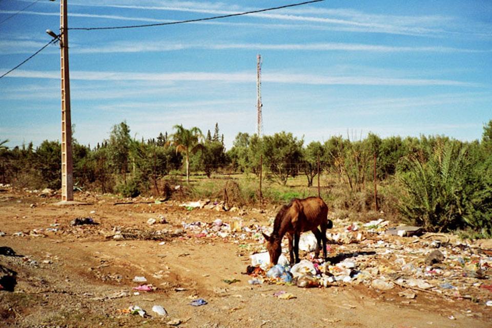places Horse