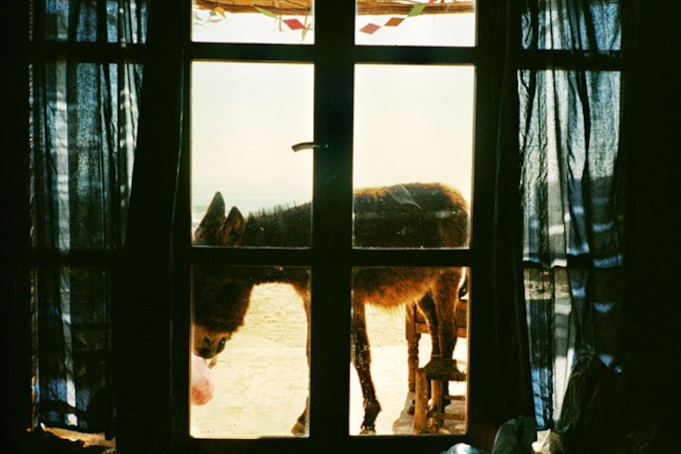 places Donkey