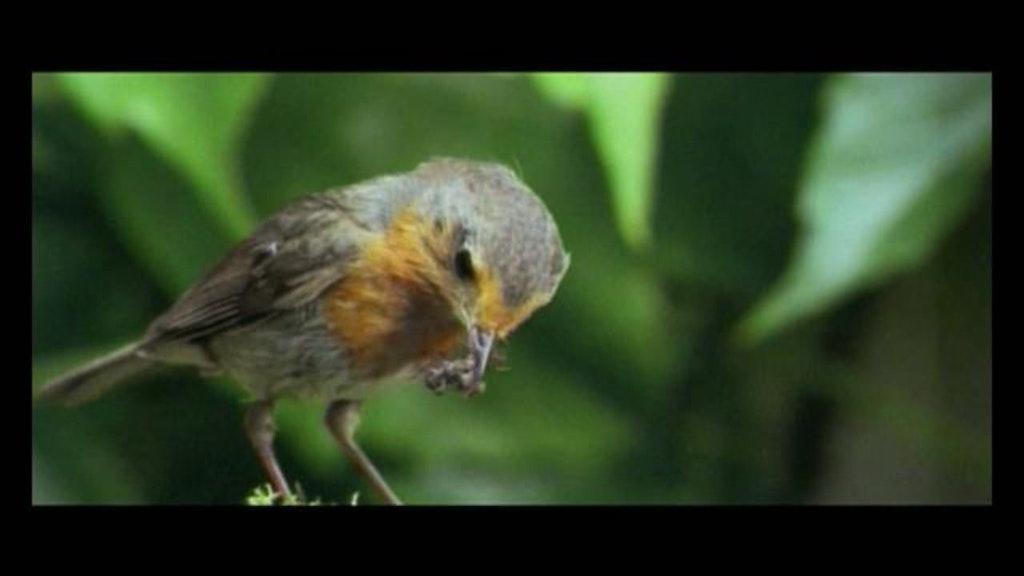 "Panasonic ""Birds"""