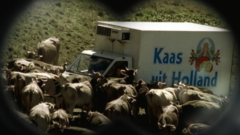 SWISS CHEESE - Riot