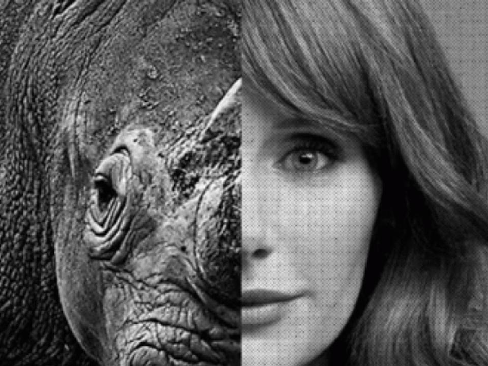 MKANDPA - Wild Aid. Ivory Free