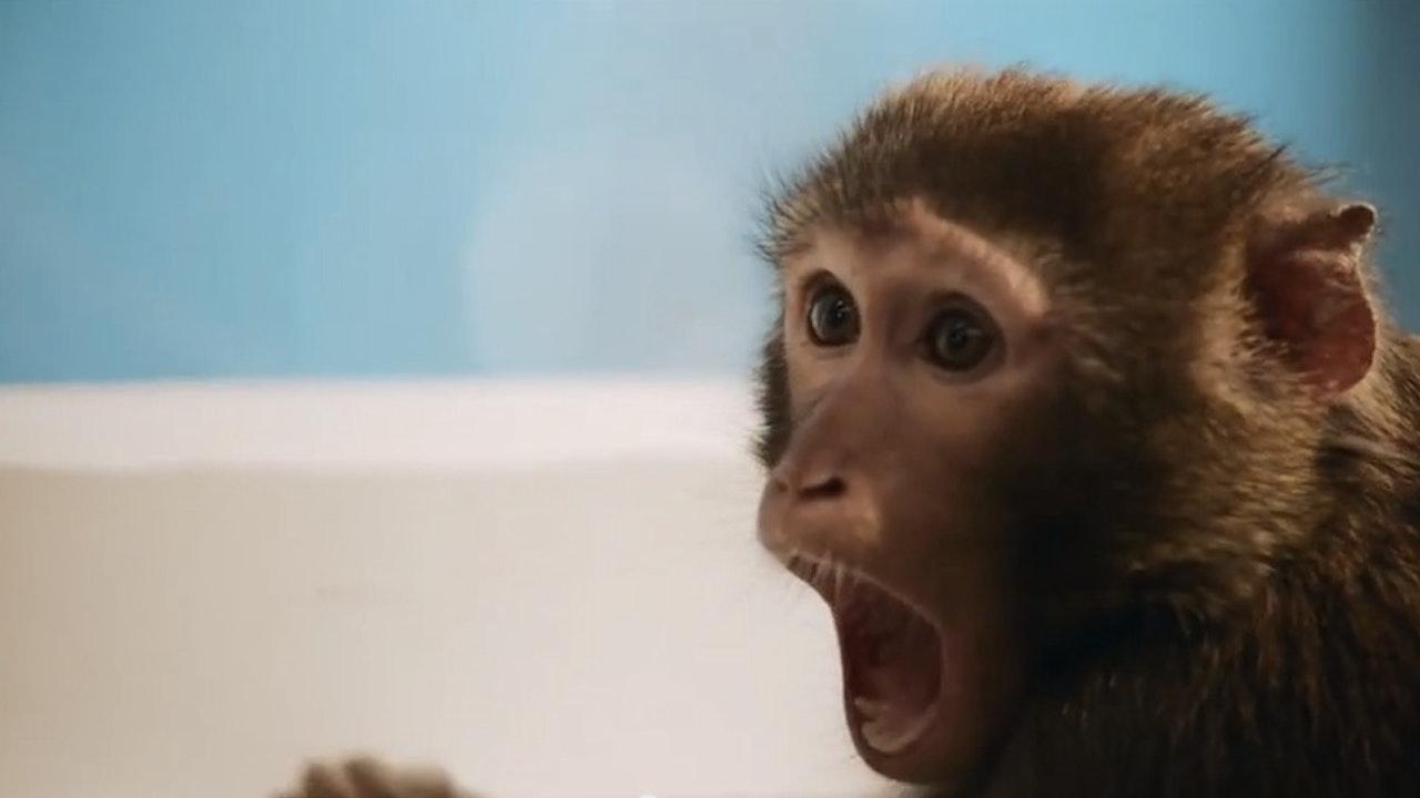 "Samsung ""Monkey Thief"""