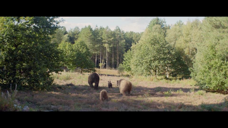 Center Parcs 'Bears' - Shot 02