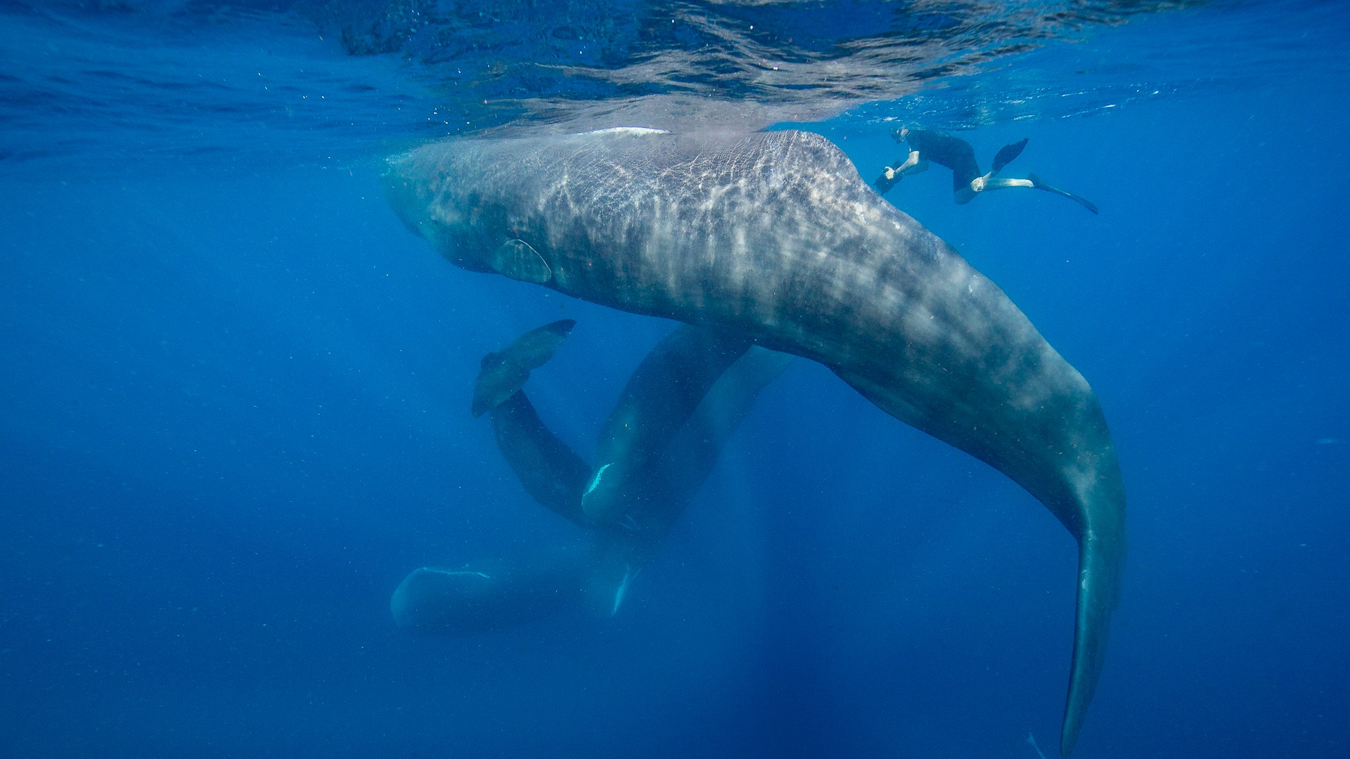 What Sperm Whales Can Teach Us About Humanity