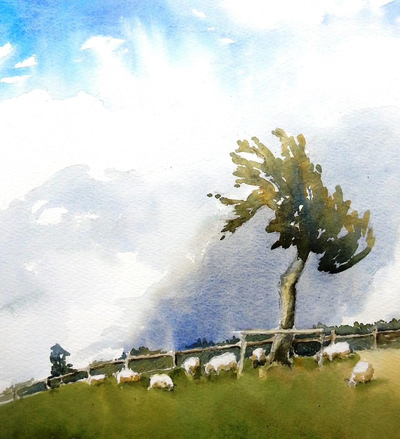 7  Sheep Tree NFS