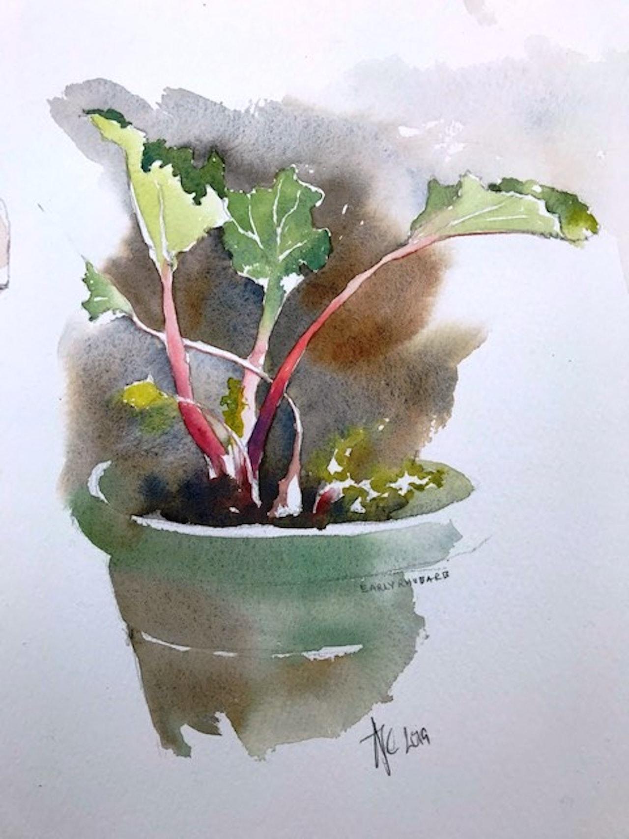 Early rhubarb 4