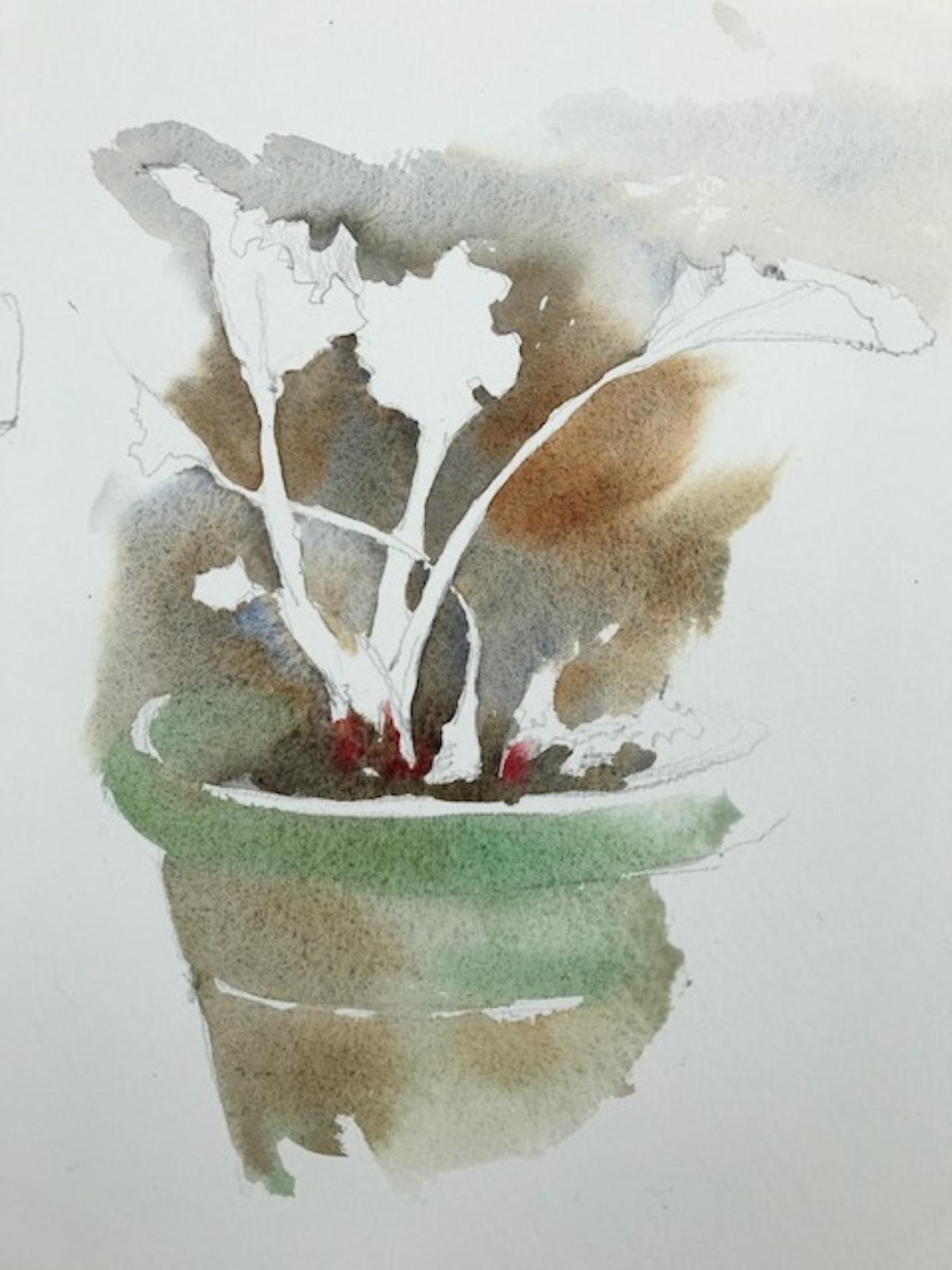 Early Rhubarb backwash