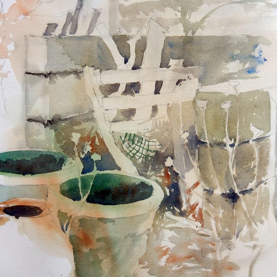 Diary of a Garden 2019 Jan pots
