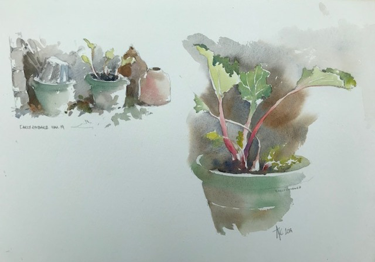 Early Rhubarb 3