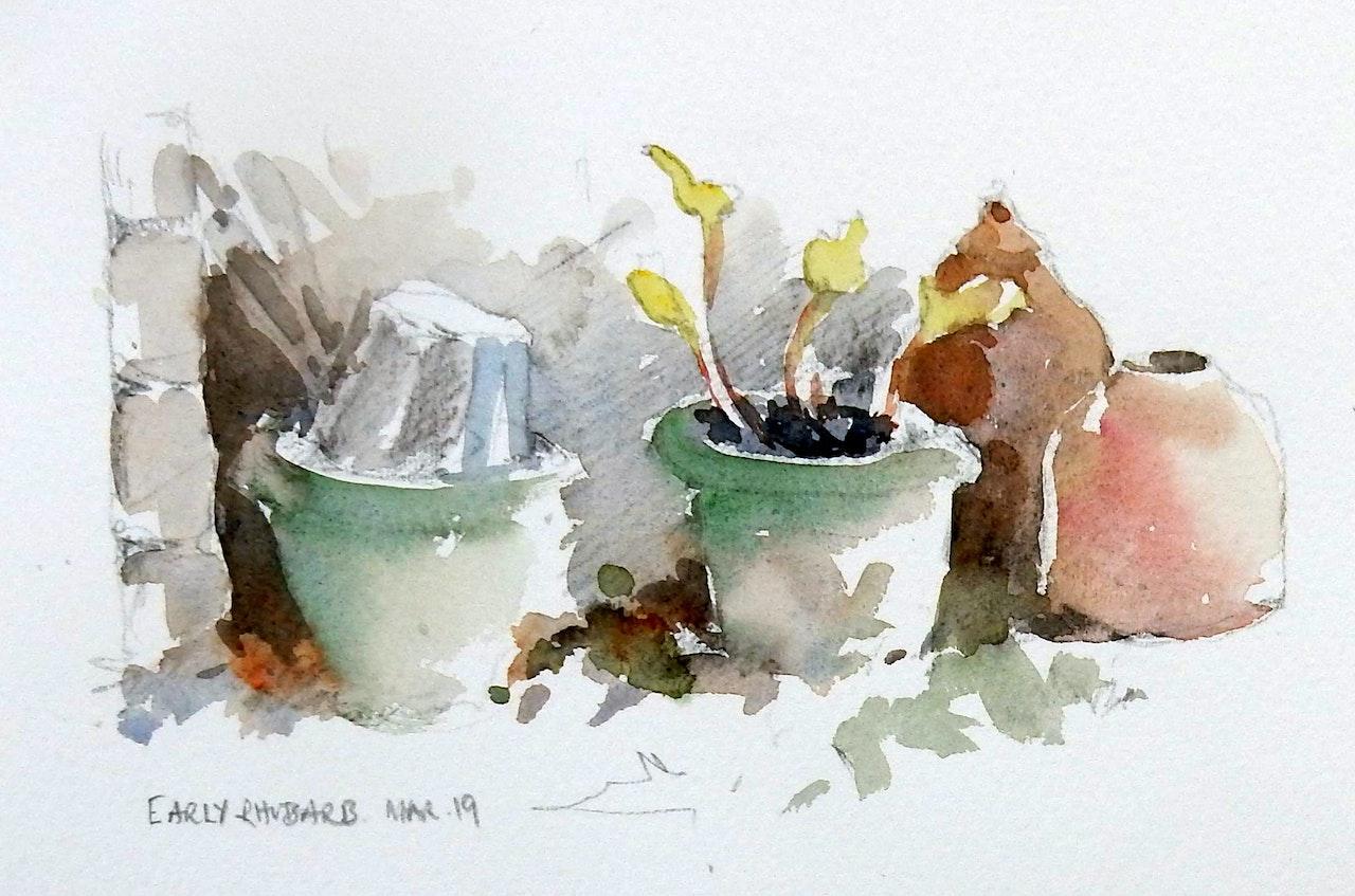 21 Rhubarb pots sketch £135