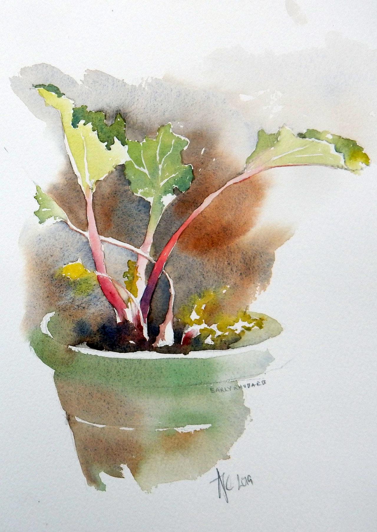 18 Rhubarb SOLD
