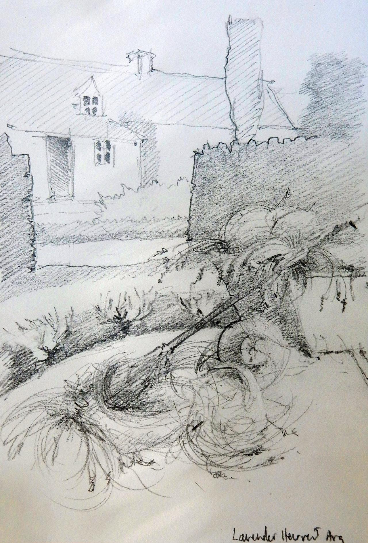 FIg 2b Sketch  Lavender Harvest