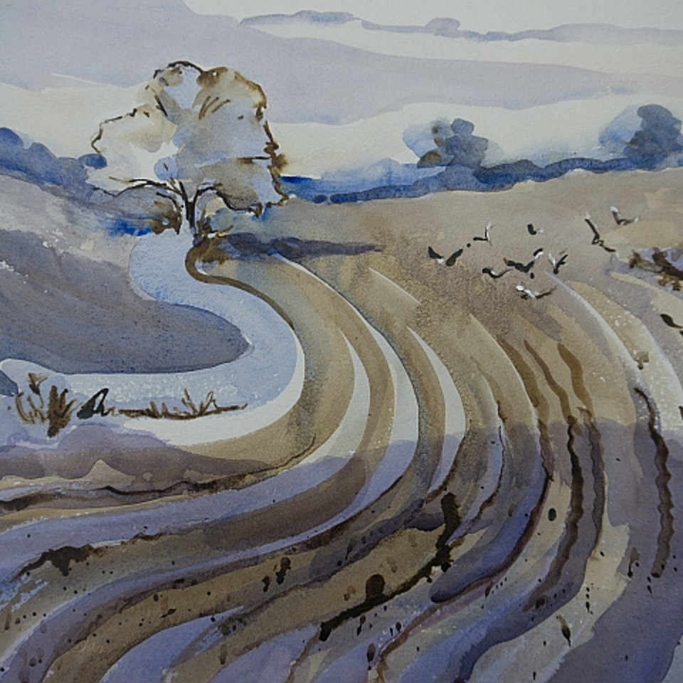 Portfolio Gulls on the ploughing. Sold Asthall Expo