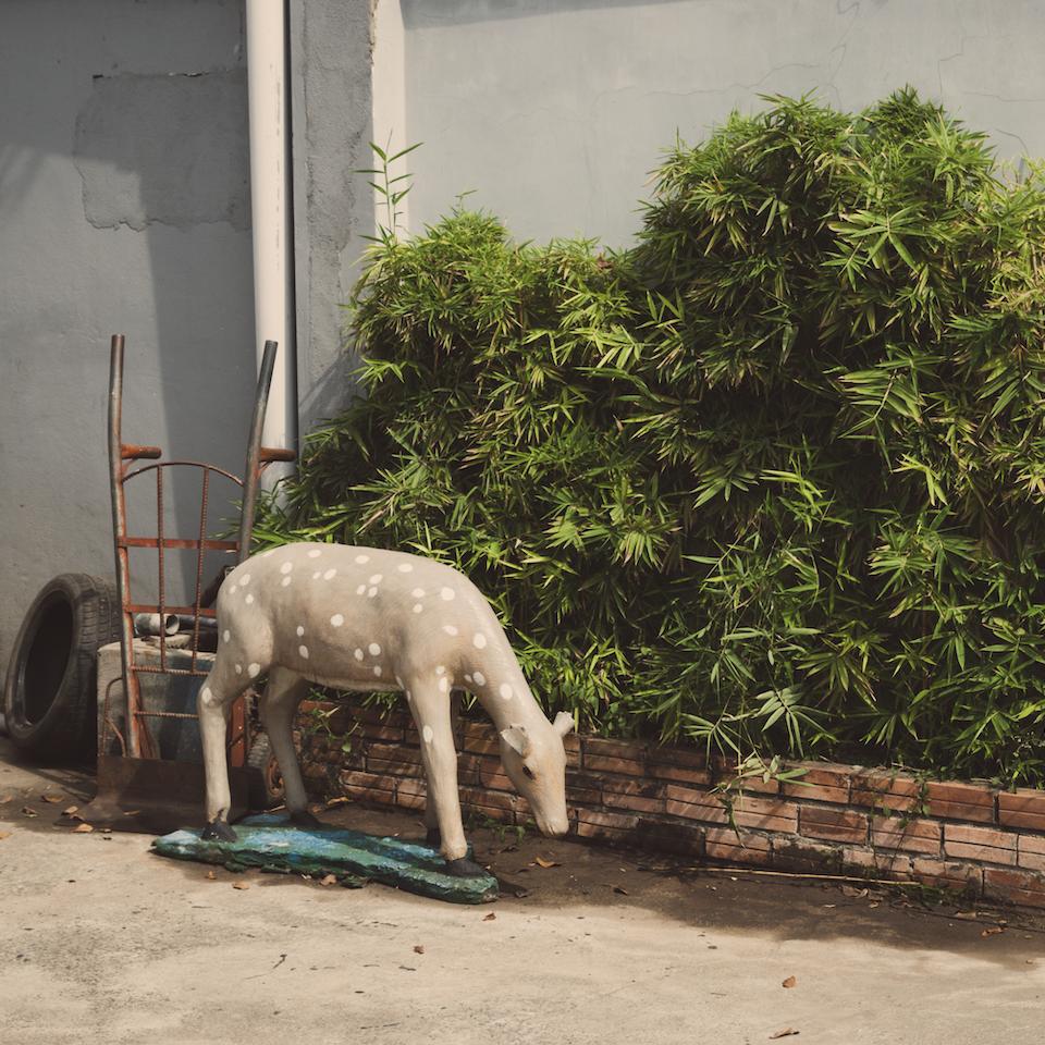 Urban Animals Urban-7