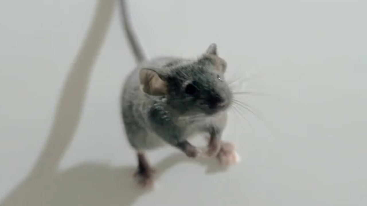 CENTRAAL BEHEER - Mouse