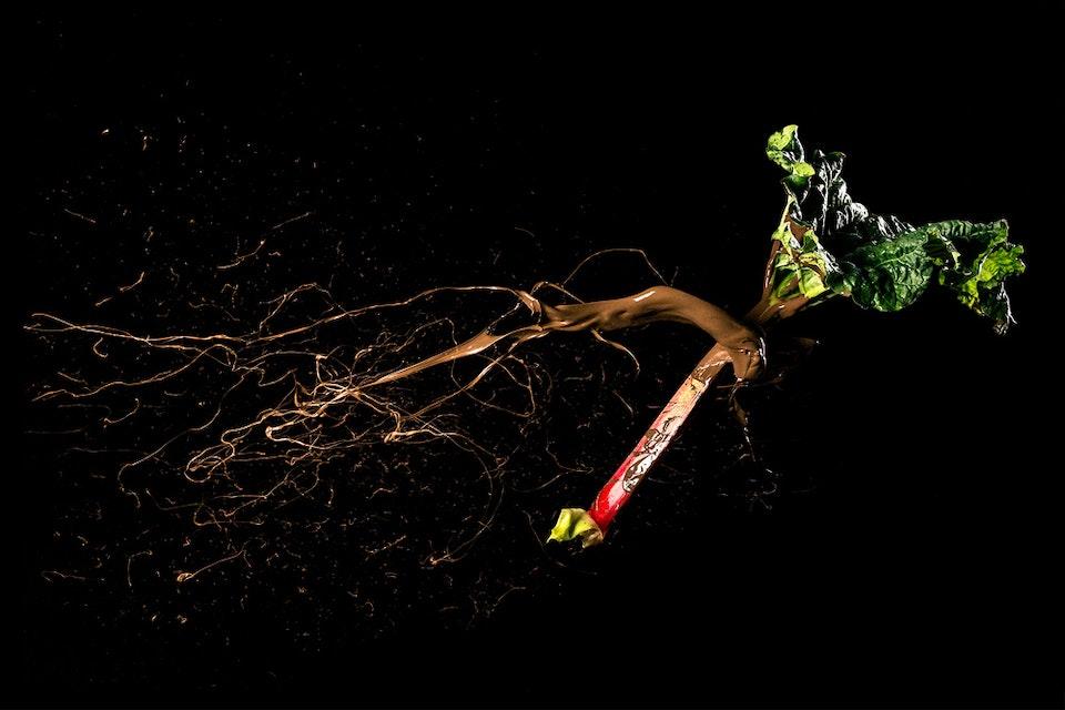 NomNom-Rhubarb -