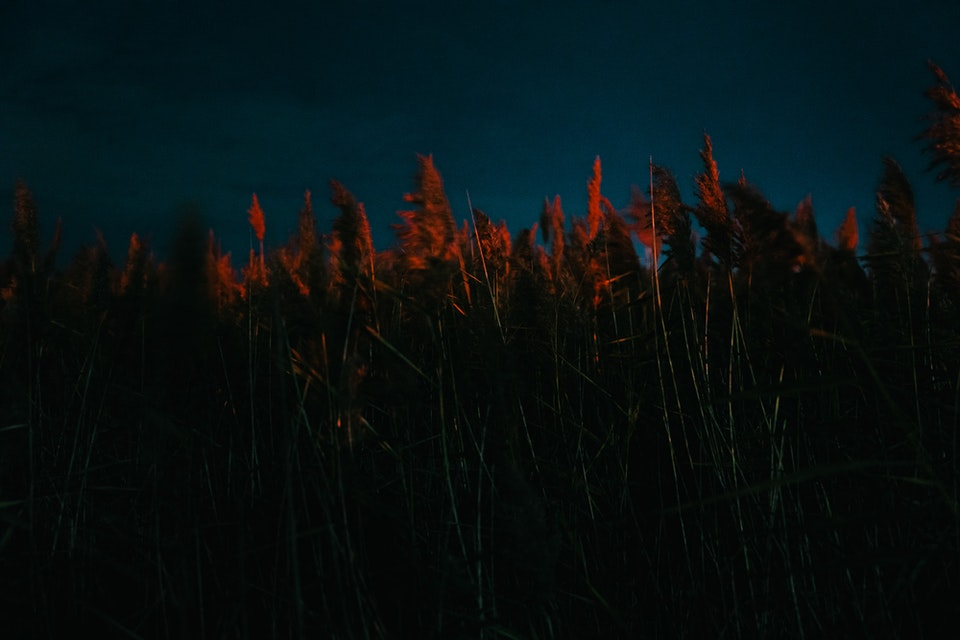 Red-Grass