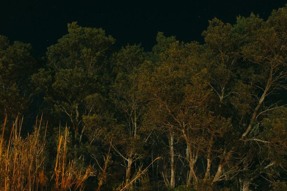 Azores Trees 01