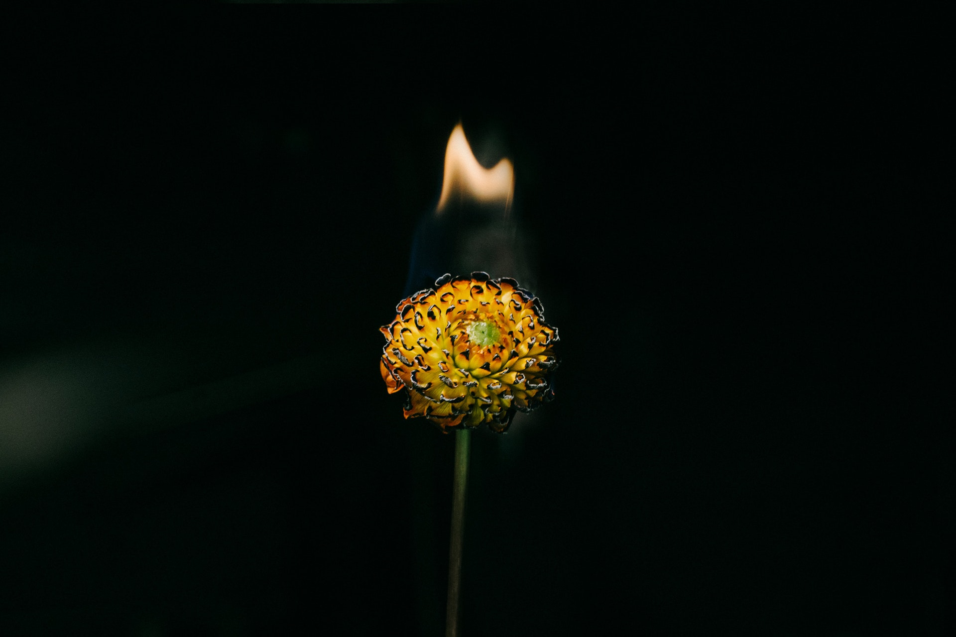 Flower-Flame