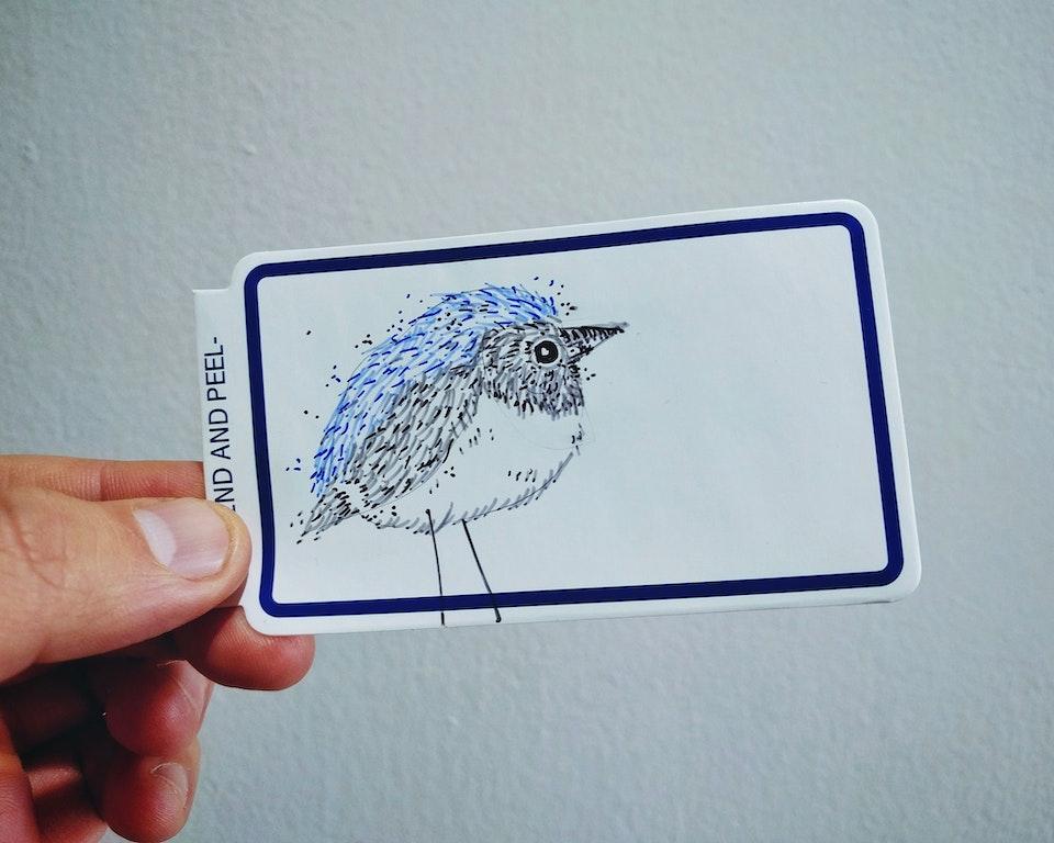 Black-throated Blue Warbler 15369124_10154917381245832_4397339370699448171_o