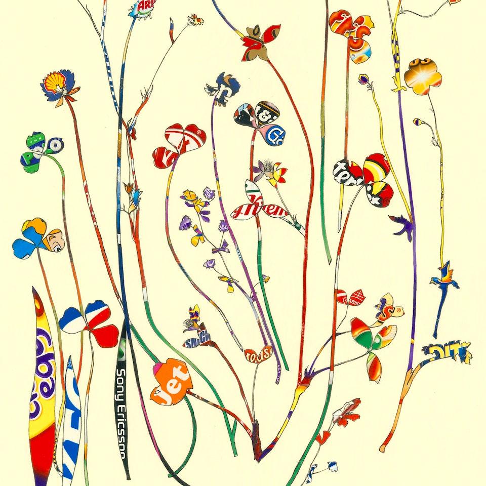Tracey Bush - Herbarium