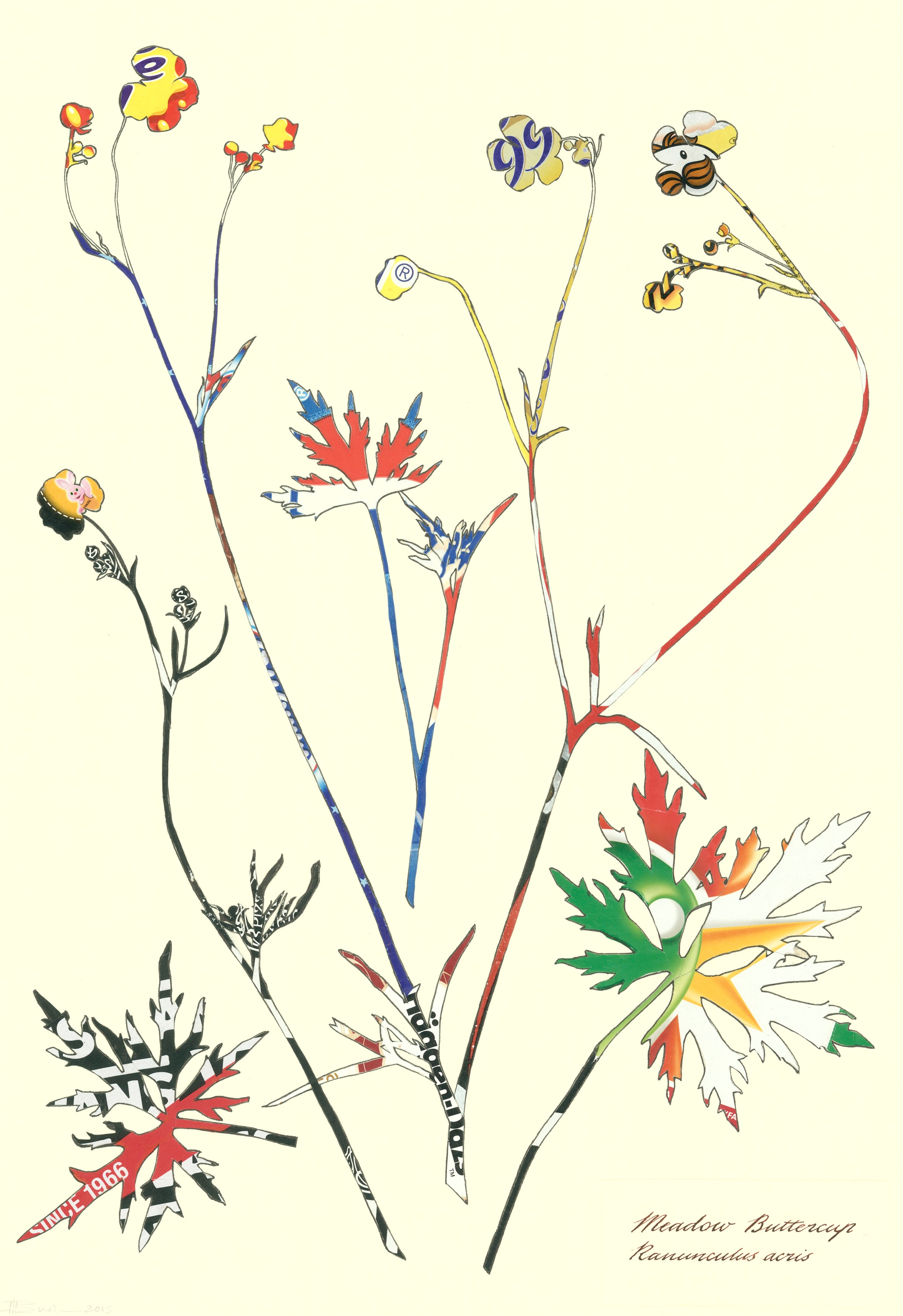 Tracey Bush - meadow buttercup herb sheet