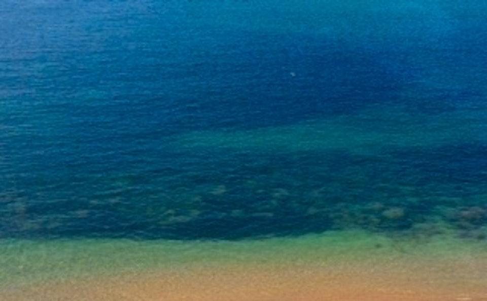 sea swims