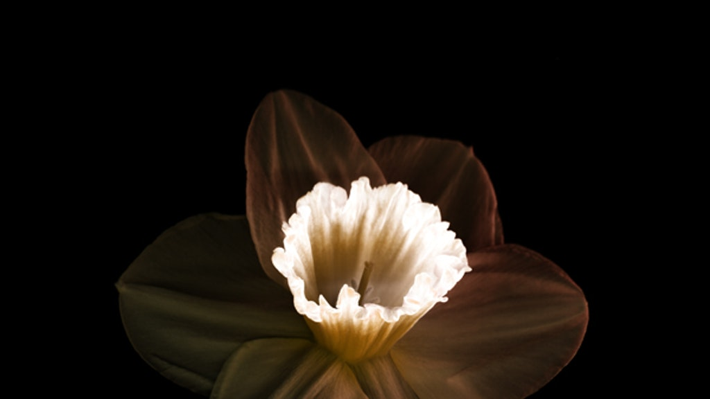 Flower by Martial