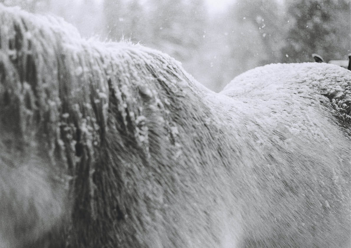 April Larivee - VLXL_Larivee_Luepke_Winter_Warmth3