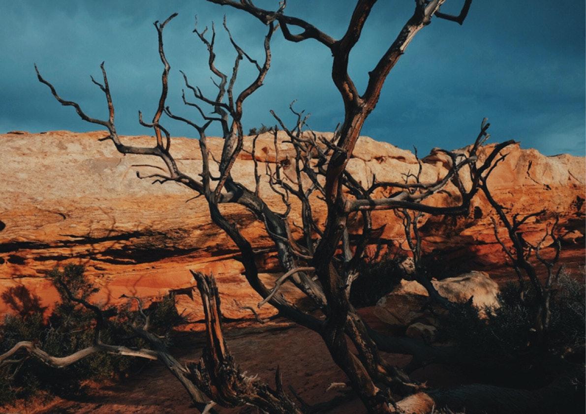 April Larivee - VLXL_Larivee_Luepke_Desert12